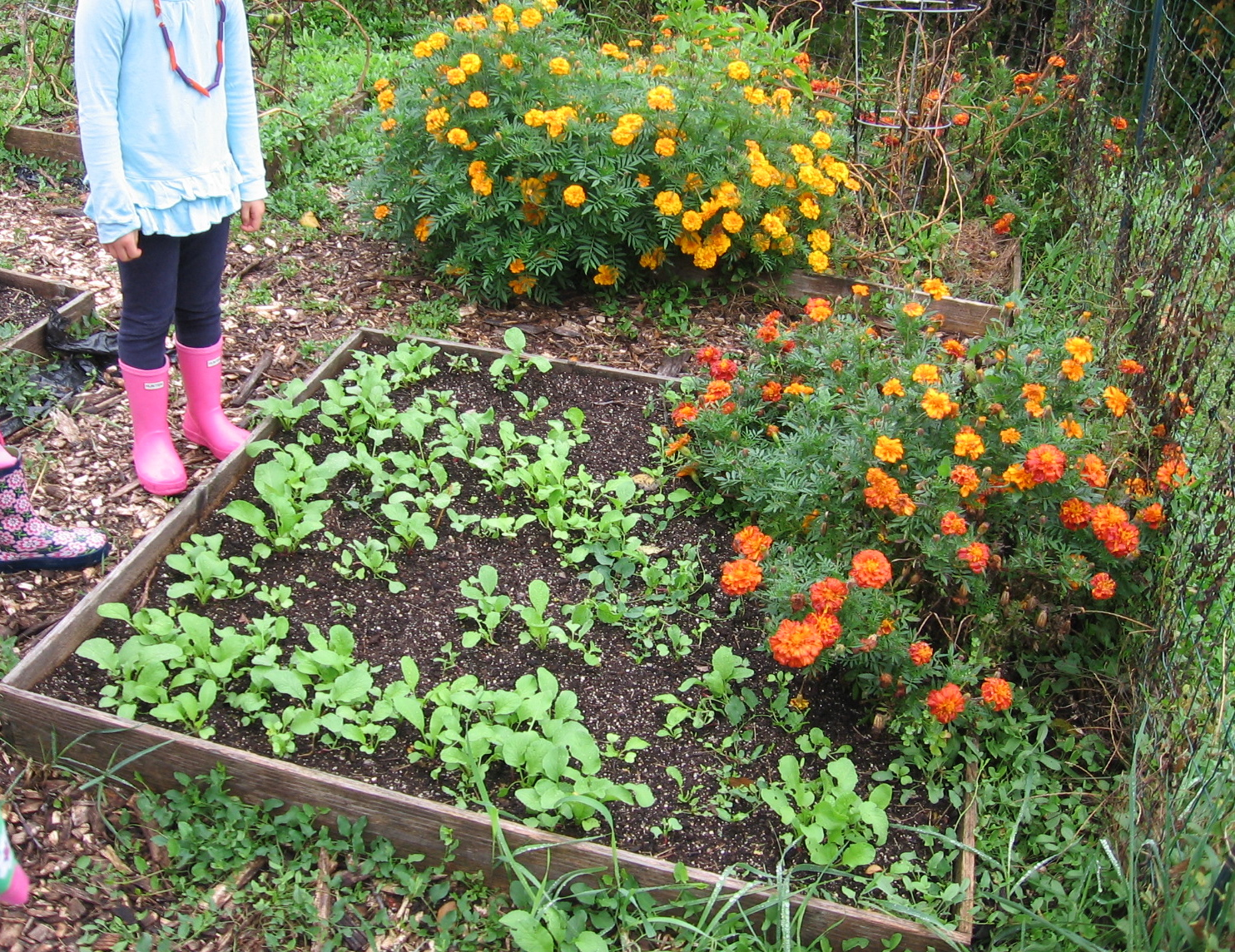 Sustainable Gardening at School | Sustainable Choices